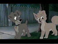 157 best Lady and the Tramp images on Pinterest  Lady and the