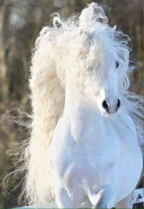 Fan of Horses - the one stop shop for horse fanatics Majestic Horse, Majestic Animals, Rare Animals, Cute Baby Animals, Animals And Pets, Wild Animals, Horse Mane, Andalusian Horse, Friesian Horse