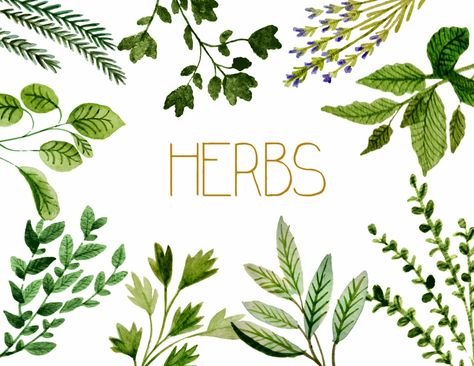 Herbs clipart, watercolor botanicals clipart, gardening clipart, wedding invites, gardening decor by rosabebe on Etsy https://www.etsy.com/listing/211814279/herbs-clipart-watercolor-botanicals