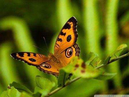 صور أشكال فراشات ملونه وجميلة ميكساتك Insects Nature Animals Butterfly Wallpaper