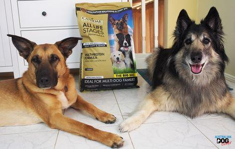 Canidae Dog Food Reviews >> Pinterest Pinterest