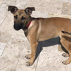 Available Pets At Rescue Dogs Rock Nyc Inc In New York New York Dog Adoption Pet Care Tips Adoption