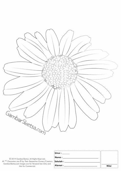 Mewarnai Bunga Matahari Pinterest Hashtags Video And Accounts