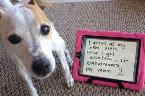 Good puppy!