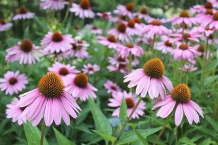 Garden The Organic Way With These Great Tips Perennial Garden Organic Gardening Organic Vegetable Garden