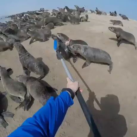 Helping out a seal