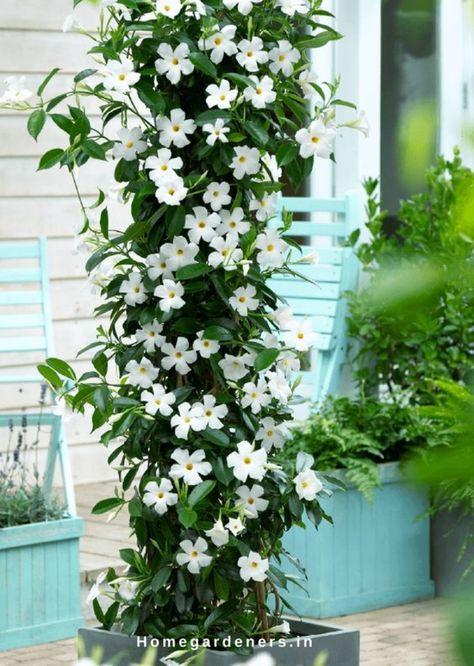 Aprenda Como Fazer um Jardim Simples e Fácil de Cuidar   Revista Artesanato