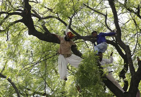Supporters of the Aam Aadmi (Common Man) Party try to rescue a farmer who hung himself from a tree during a rally in New Delhi, April 22, 2015. Four people climbed the tree to try to save the man after he was seen hanging. More than a dozen debt-ridden farmers have committed suicide in India in recent weeks as discontent grows against Prime Minister Narendra Modi, who they say has done little to ease the plight of rural communities..