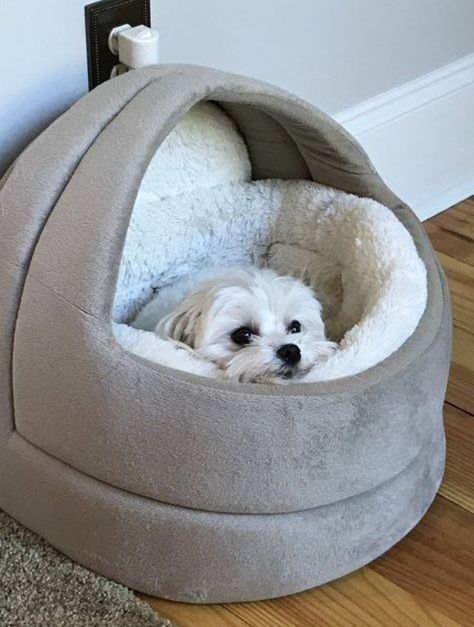 Diy Discover Fluffy dogs - The Reason Why Everyone Love Tiny Fluffy Dog Tiny Fluffy Dog Fluffy Dogs Tiny Dog Cute Puppies Cute Dogs Dogs And Puppies Cute Dog Beds Cute Baby Animals Animals And Pets Tiny Fluffy Dog, Fluffy Dogs, Tiny Dog, Small Dogs, Cute Baby Animals, Animals And Pets, Funny Animals, Cute Dogs And Puppies, Baby Dogs