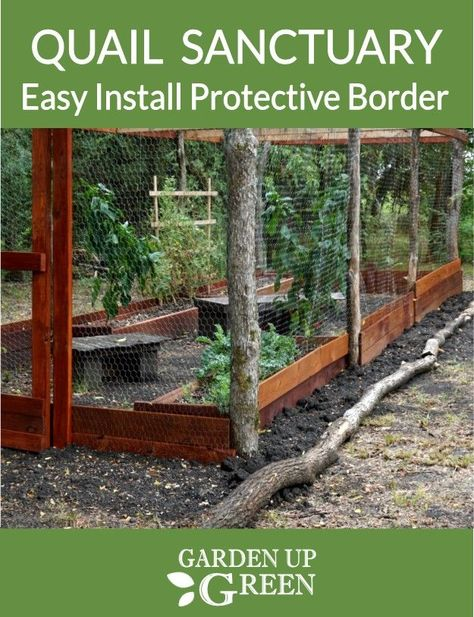 Protect your quail sanctuary with a protective border. Get these easy install steps. Portable Chicken Coop, Backyard Chicken Coops, Backyard Farming, Chickens Backyard, Raising Quail, Raising Farm Animals, Raising Chickens, Quail Pen, Quail Coop
