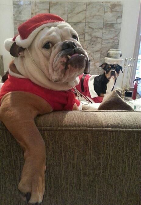 Click Visit Site And Check Out Best Bulldog T Shirts This