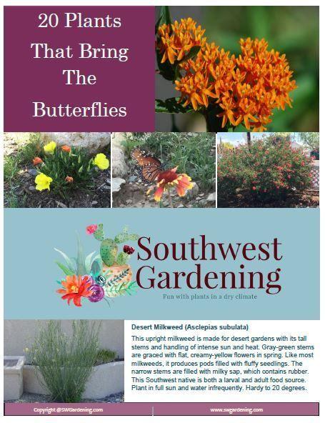 Plants Yellow Flowering, Southwest Garden Plants