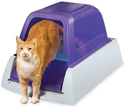 Amazon Com Petsafe Scoopfree Ultra Self Cleaning Cat Litter Box Covered Automatic With Disposable Tray Purple Pet Supplies Best Litter Box Best Cat Litter Self Cleaning Litter Box
