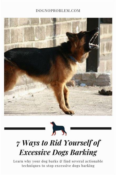 Dog Training For Kids Dog Training Tallahassee Dog Training