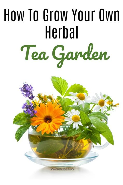 How to Grow Your Own Herbal Tea Garden- 10 Herbs To Get You Started