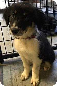 Pin By Crafty Fox On Border Collie Mixes Collie Mix Border
