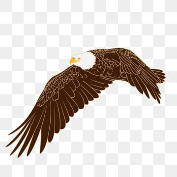 Eagle Picture Free Png Transparent Layer Material Whitehead Eagle Tiger Head Sea Eagle American National Bird Bald Eagle Png Transparent Clipart Image And Ps Eagle Pictures Free Png Blue Poster