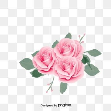 Pink Rose Flower Png And Psd In 2020 Rose Flower Png Pink Flowers Background Flower Png Images