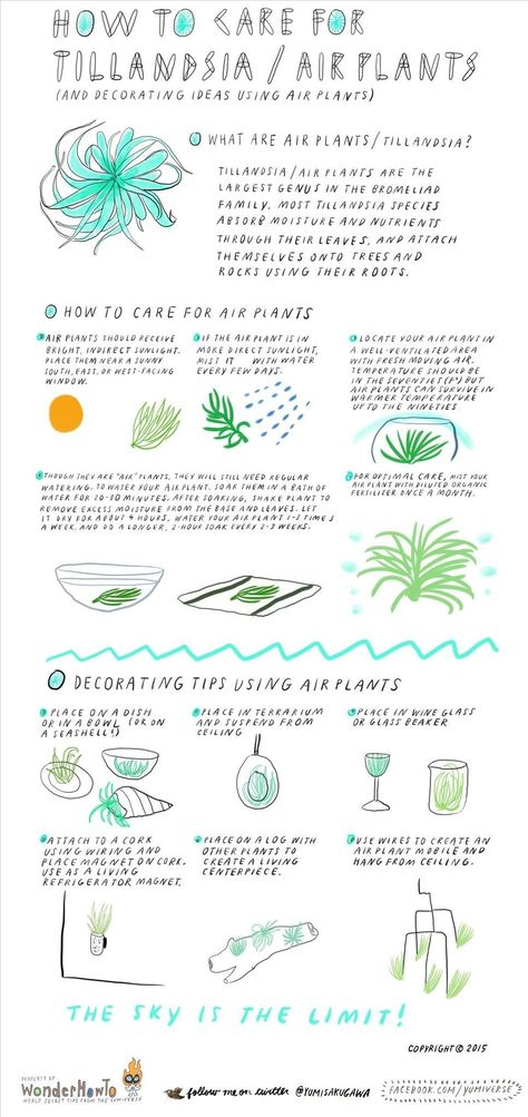 How To Care For Air Plants Decorate With Them Plants Air