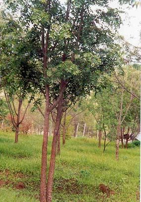 The Worst Advices We Ve Heard For Lantana Plant Meaning In Marathi Lantana Plant Meaning In In 2020 Plant Meanings Lantana Plant Lantana