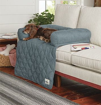 How To Keep Dogs Off Couch Keep Dog Off Couch Dog Solution Dogs