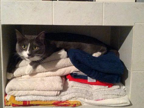 Ciotolina tra gli asciugamani puliti..