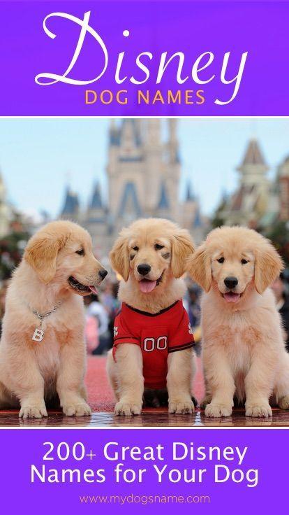 Disney Dog Names Awesome Disney Names For Your Pup 211 Names Disney Pet Names Dog Names Disney Girl Dog Names