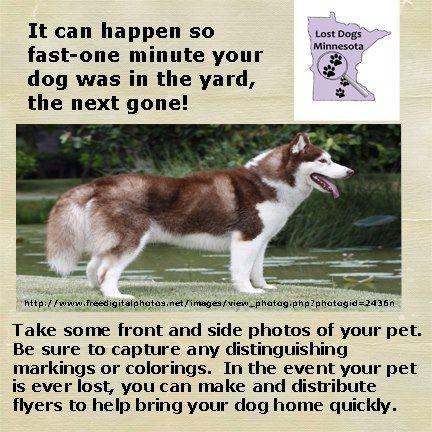 Free Pets Craigslist Mn