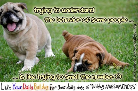 From Your Daily Bulldog On Facebook Bulldog Funny Animals Dogs