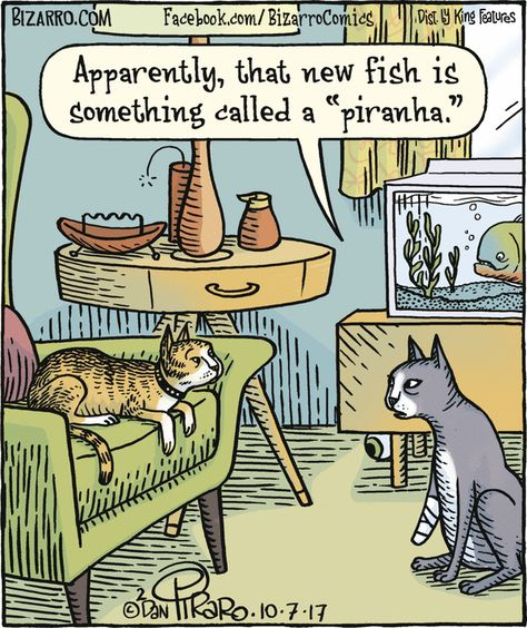 Bizarro In 2020 Mit Bildern Katzen Witze Lustige Comic Bilder