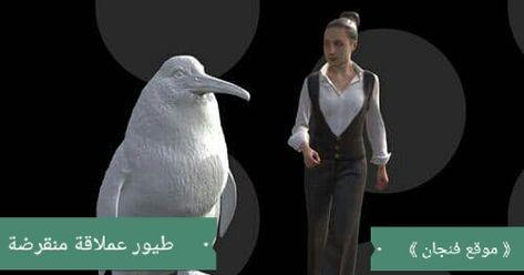 الكشف في نيوزلندا على بقايا طيور عملاقة تشبه البطاريق فنجان Animals Penguins Oio