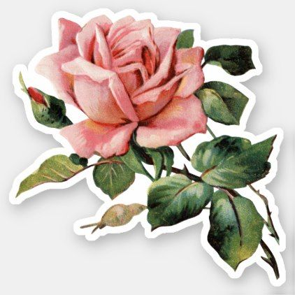 Vintage Pink Rose Sticker Vintage Romantic Gifts Ideas Diy Floral Stickers Watercolor Stickers Homemade Stickers