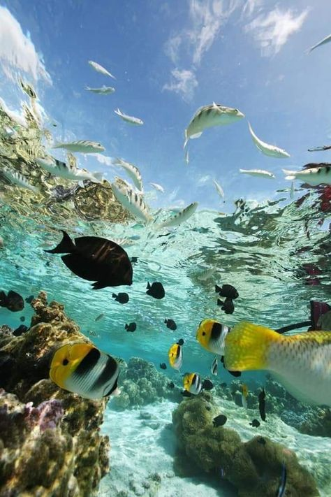 Underwater Photography, Nature Photography, Photography Beach, Animal Photography, Foto Picture, Beautiful Sea Creatures, Visit Maldives, Ocean Wallpaper, Underwater Life