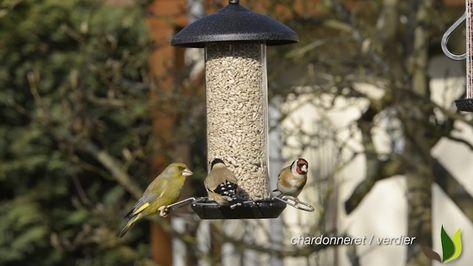 Pourquoi Nourrir Les Oiseaux Du Jardin En Hiver Jardinerie