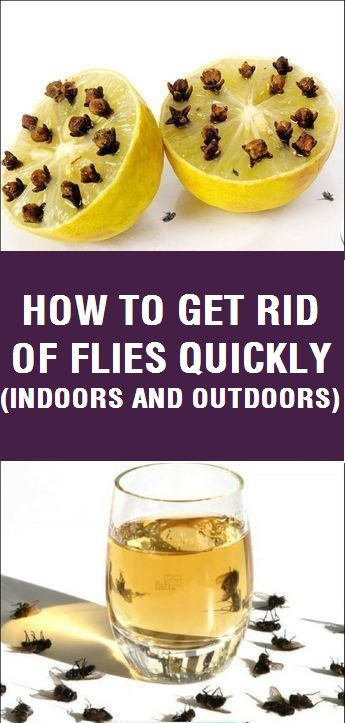 How To Get Rid Of Fliesutuy Uuuuuu U Uyquickly Indoors And Outdoors Get Rid Of Flies Fruit Fly Trap Diy How To Get Rid