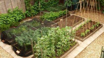 植物栽培 おしゃれまとめの人気アイデア Pinterest Kasumi R 画像
