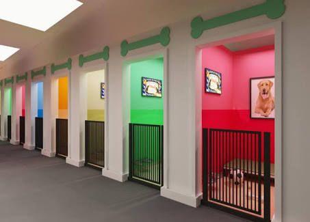 Image Result For Veterinary Clinic Interior Design Indoor Dog Park Dog Boarding Facility Dog Boarding Kennels