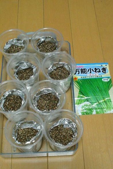 スポンジに久々の種まき 水耕栽培 野菜 水耕栽培キット 水耕栽培