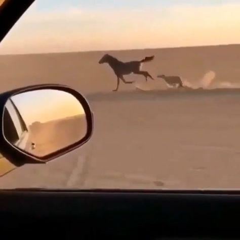 Race Between Horse & Canine - #Dog #Horse #Race