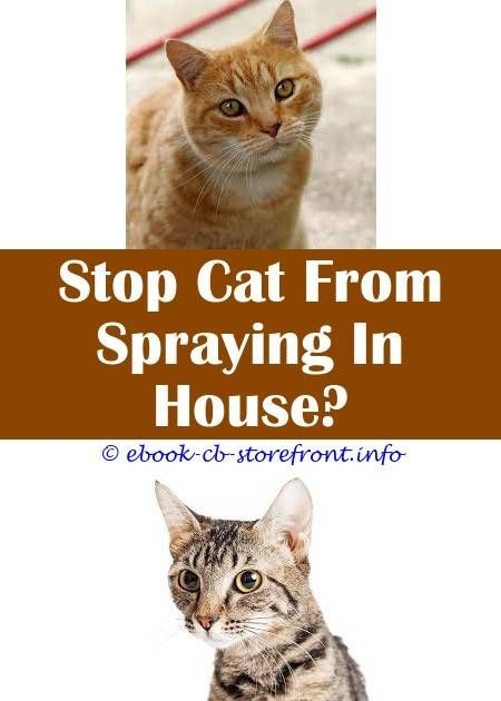 4 Determined Tricks: Stop Cat From Spraying On Couch stop cat from spraying  on couch.Flea Collars And Spray On Cats hot to get rid of cat spray smell.Ca…  | Sensible