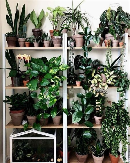 Plants Aesthetic Plants Lidl Plants Respiration Climbing Plants For Shade Ae Aesthetic Climbing Lidl Plants Res In 2020 Plants Plant Aesthetic Plant Shelves