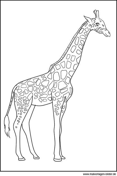 malvorlage giraffe 1038 malvorlage giraffe ausmalbilder
