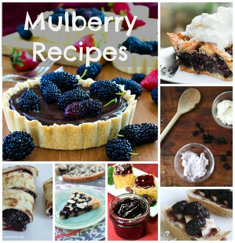 Mulberry Recipe picks from Pinterest