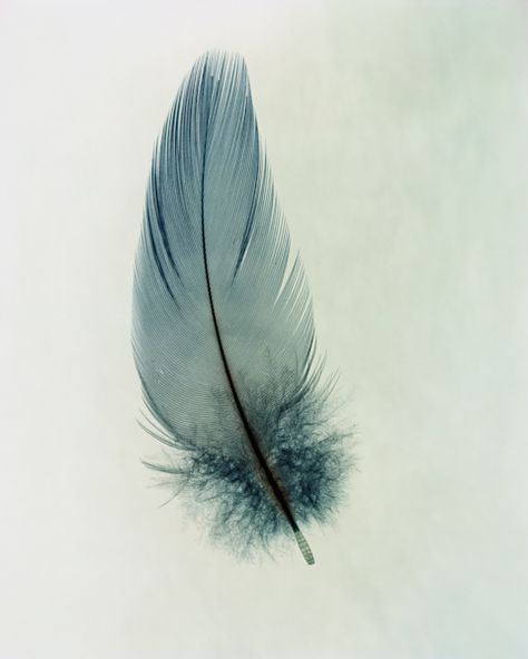   ROAR VIBE LONDON   Blue, small and sweet feather.  Pin Via - https://www.reiss.com/explore/blog/ss14-trend-ruffling-feathers/