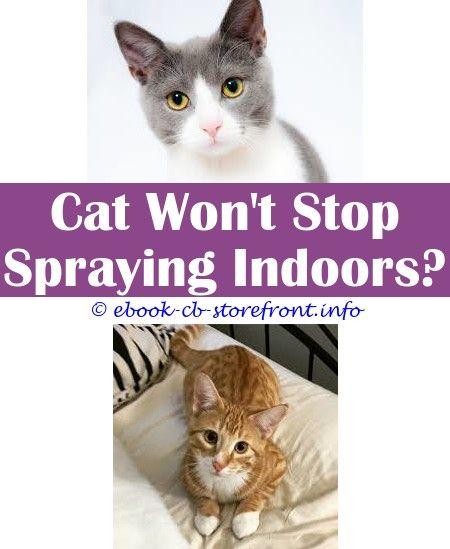 spayed cat spraying blood