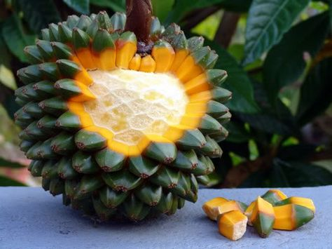 Another eyecatching pandanus fruit. The leaves of the pandan family are used to flavour curries, especially biryani.