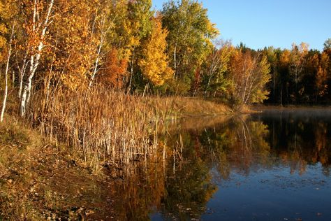 Lush #autumn colors reflect onto a river in the Stevens Point area. (Photo: Bob Mosier)