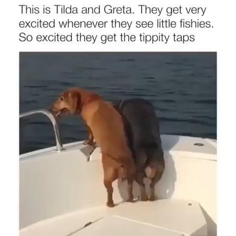 Excited Fishing Tippytaps Funny Dog Memes Dachshund Dog Cute Dog Memes