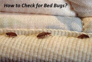 How To Get Rid Of Cockroaches Fast Naturally Kill Cockroaches