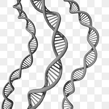3 Curved Dna Helix Grey Color Low Poly Genome Structure Technology Png Transparent Clipart Image And Psd File For Free Download Dna Helix Clip Art Curved Arrow
